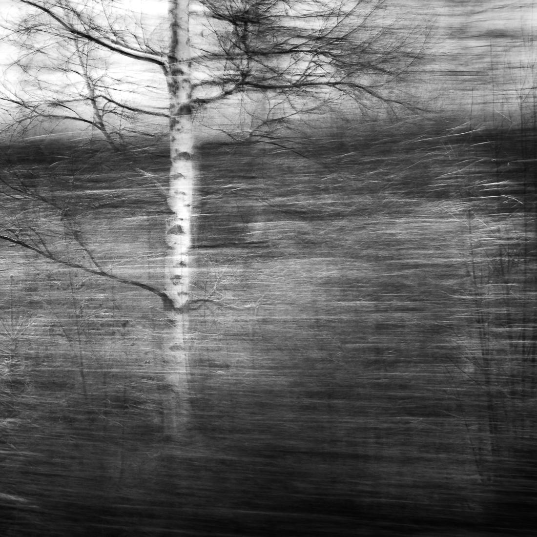 [:nb]Naked Birch[:]